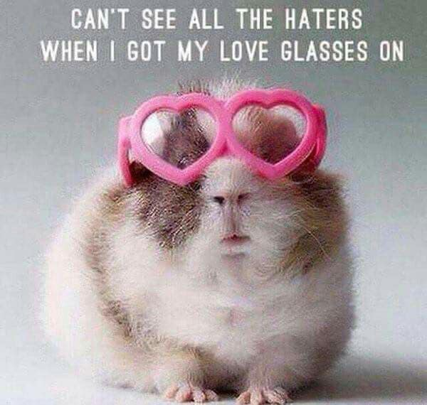 Meme with hamster wearing heart-shaped glasses: Can't see all the haters when I got my love glasses on
